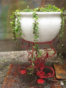 Pot holder w plant